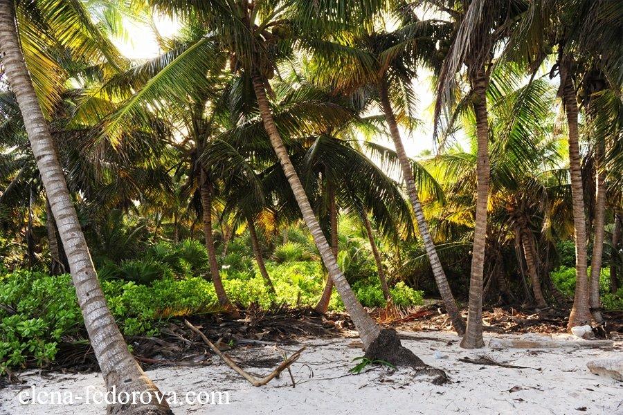 xcacel beach riviera maya