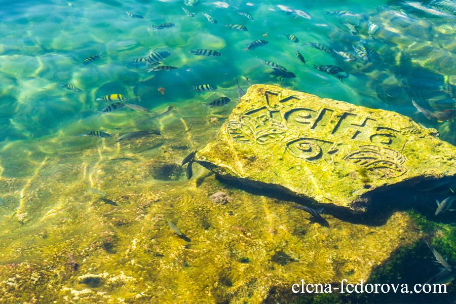 snorkeling xel ha mexico