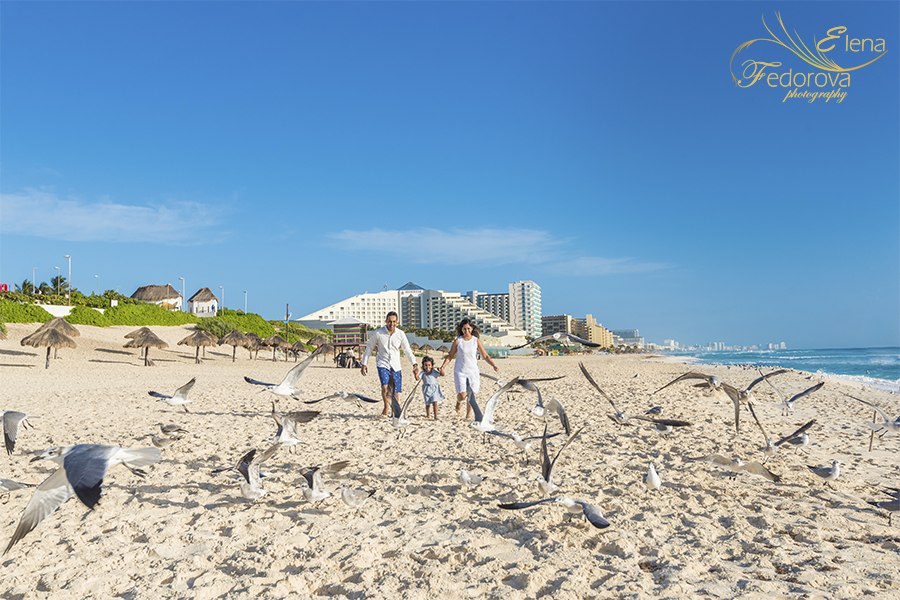 seagulls on beach in Cancun