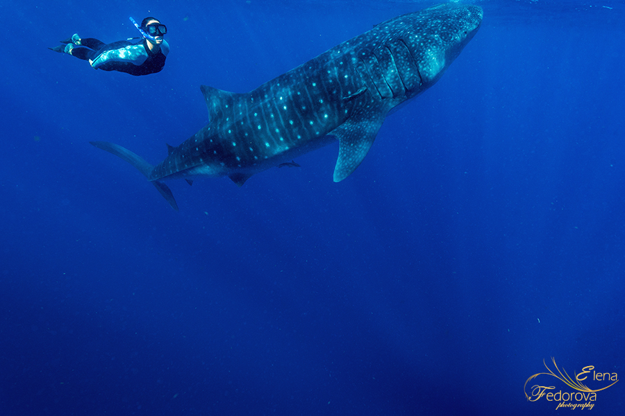 Christina Cindrich photos with whale sharks