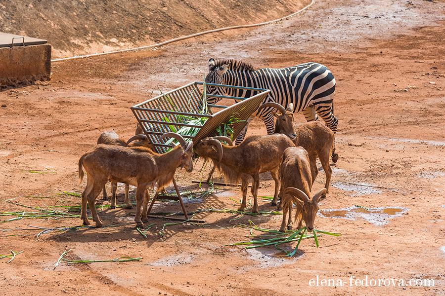 animaya zoo mexico merida
