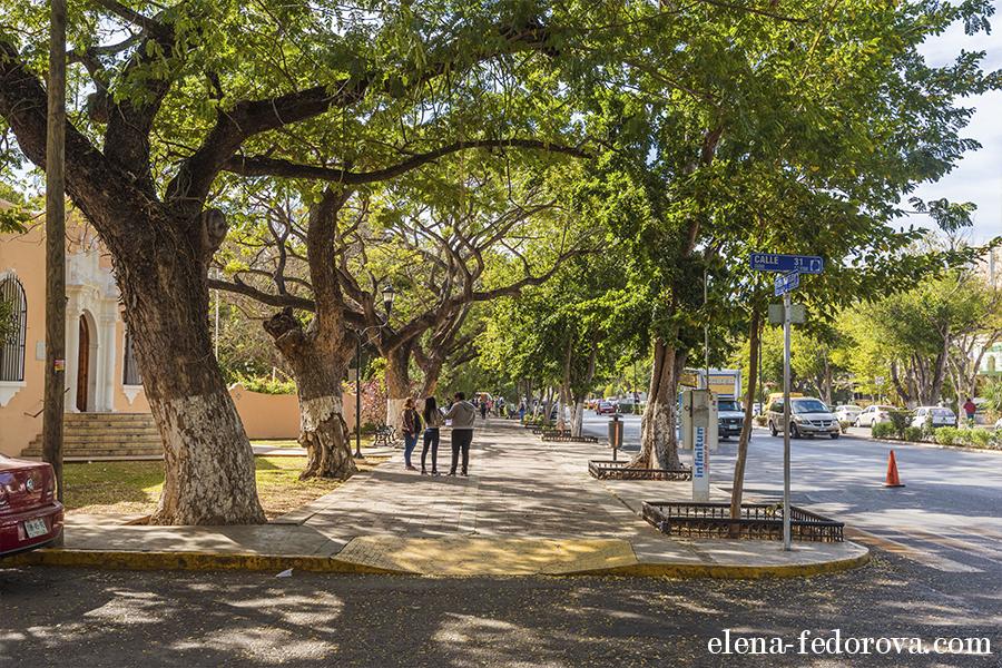 montejo street photo merida mexico